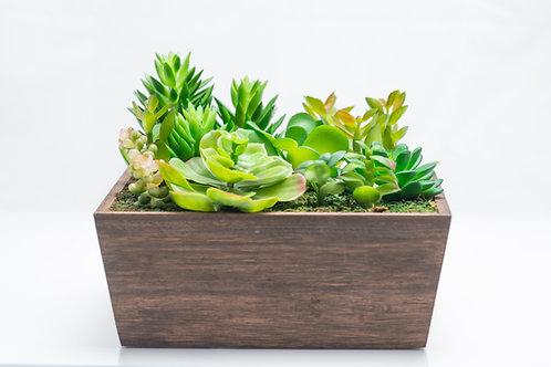 Bel Giardino Mixed Succulents in Wooden Centerpiece