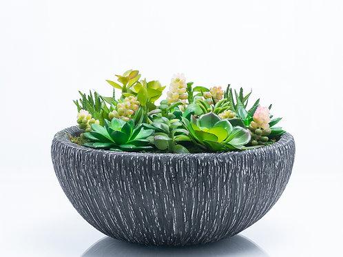 Bel Giardino Assorted Succulents in Grey Ceramic Centerpiece