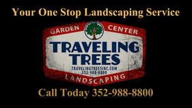 Traveling Trees.wmv