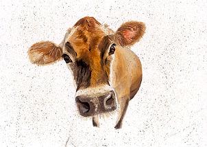 Jersey Cow No2.jpg