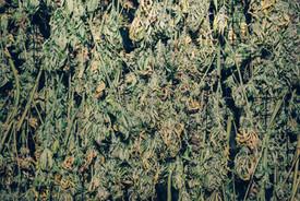 hemp drying anthill farm agroforestry