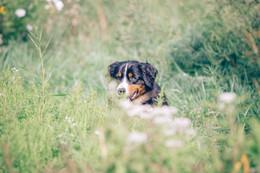 dog anthill farm agroforestry