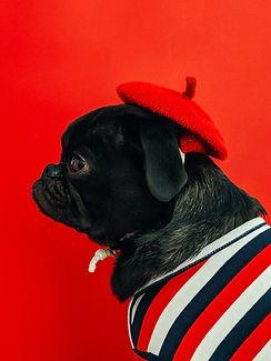 pug wearing a beret wsdc