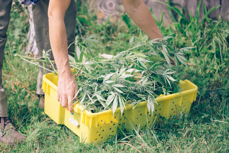 box of raw cut hemp at anthill farm agroforestry