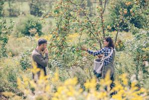 harvest at anthill farm agroforestry