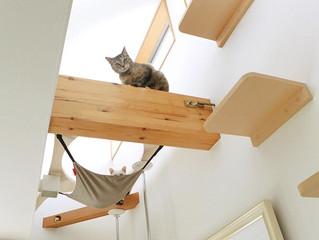 猫🐈ちゃんと一緒の暮らし part1