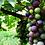 Thumbnail: Az. Agricola Patrone