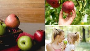 Healthy Food ตอนที่ 2 แอปเปิ้ลผลไม้ทานง่ายดีต่อสุขภาพร่างกายและผิวพรรณ