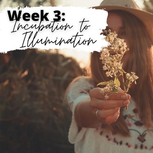 Week 3: Incubation to Illumination