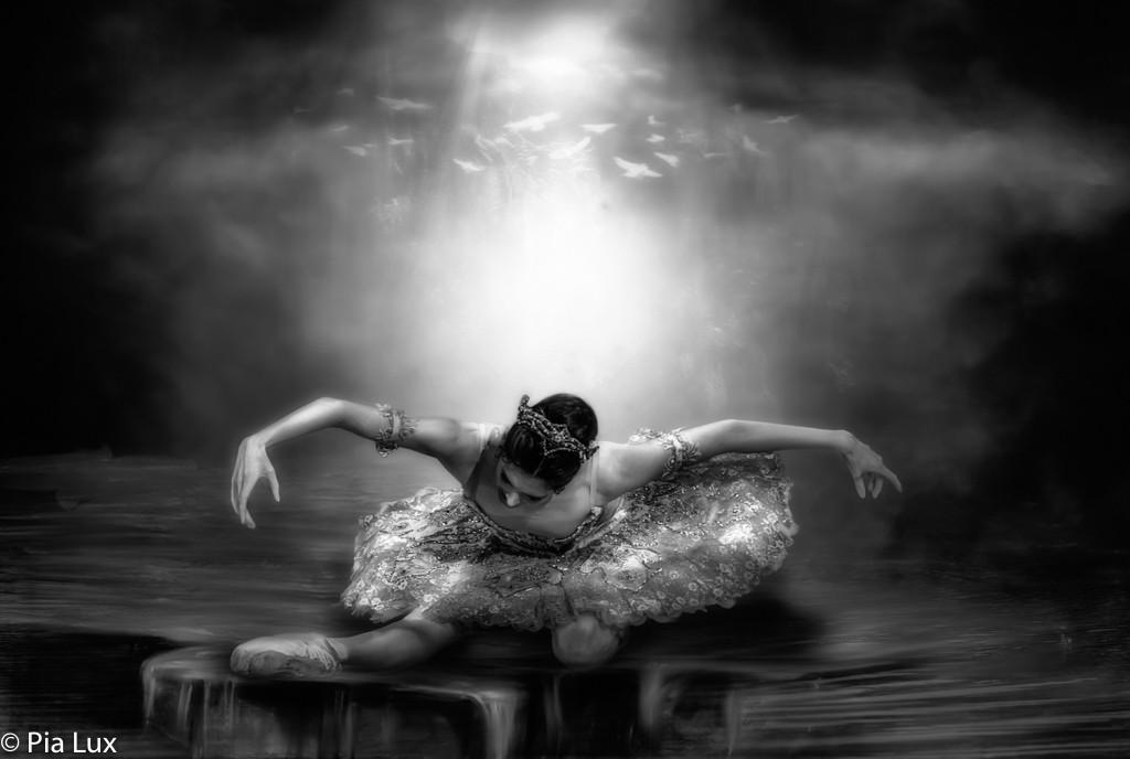 The Swan....