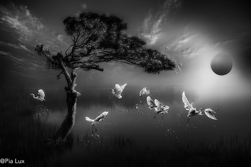 Flight of the herons