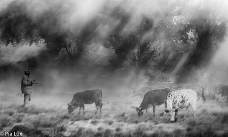 Sunrays through the mist - mono