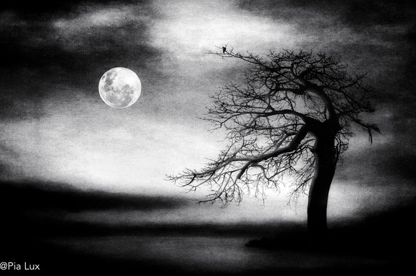 And the moon stood still for the nightbi