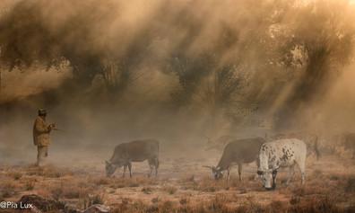 Sunrays through the mist