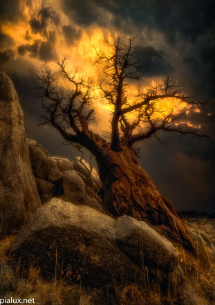 Baobab with fire in the sky.jpg