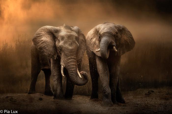 Elephants dust bath.jpg