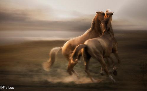 Stallion Rivalry