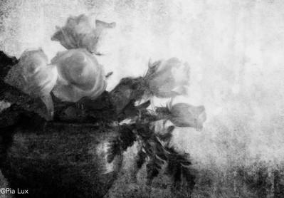 Pot met wit rose mono