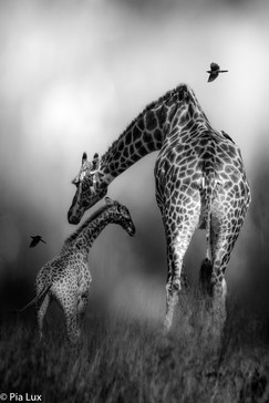 Mother's love mono.jpg
