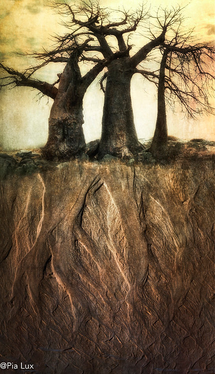 There is a tree as old as me