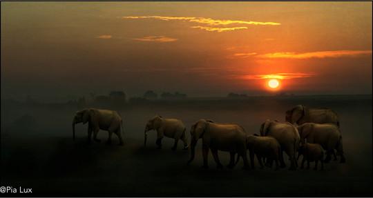 Wildlife composites