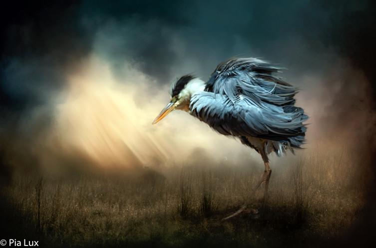 Heron in the light.jpg
