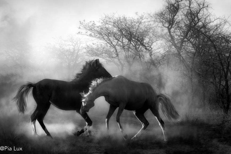 Playing in the dust - mono