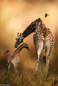 Mother's love.jpg