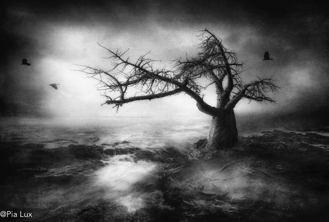 Beneath the baobab tree - mono