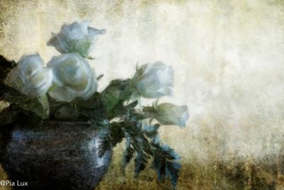Pot met wit rose
