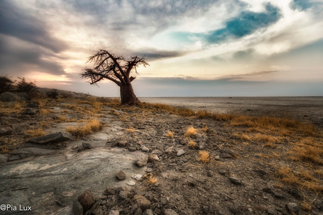 The lonesome tree at Kubu Island