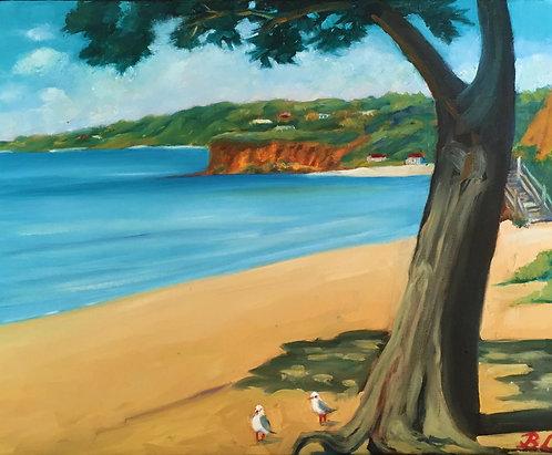 Seagulls, Mothers Beach