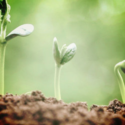 seedling-sprout