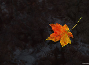 Grief's Likeness to Fall - What is Lost, What is Left, What is Possible