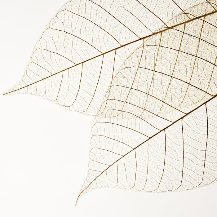 dried-leaves