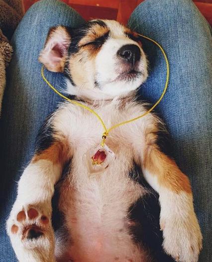 Puppy Holly