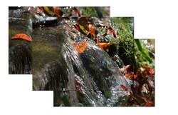 waterleaves