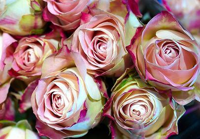 roses-5958295_1920.jpg