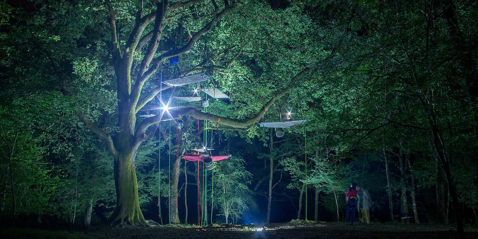 Bivouac dans les arbres