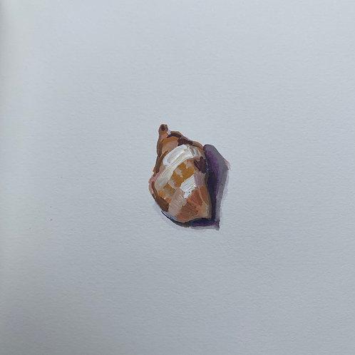 Shell #7