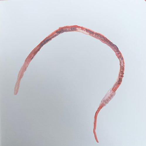 Earthworm13