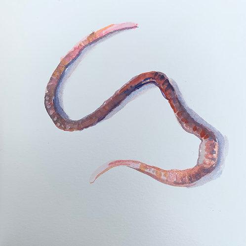 Earthworm 6