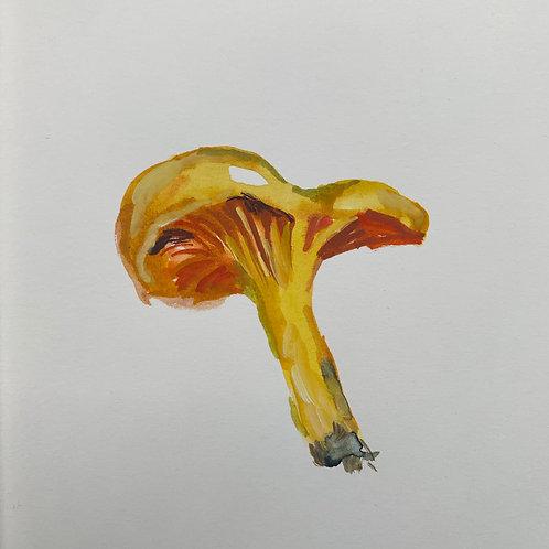 Golden Chantarelle