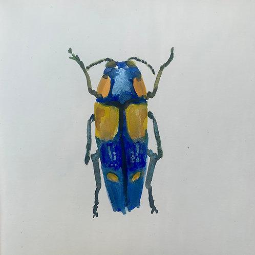 Calodema wallacei