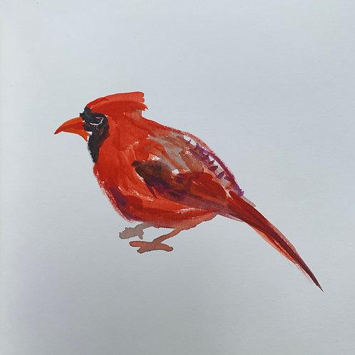 Cardinal #7