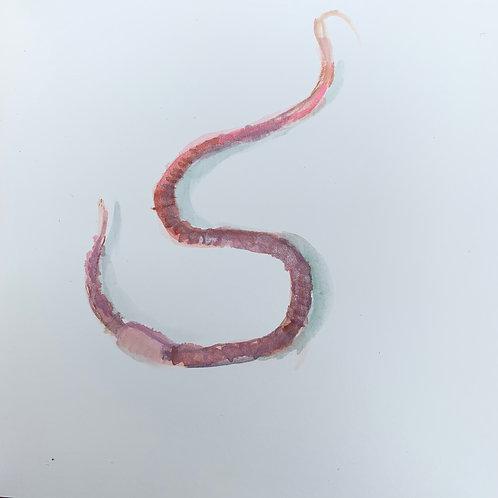 Earthworm 9