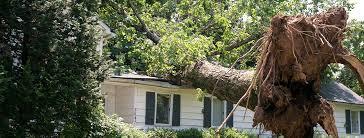 TREE ON HOUSE PHOTO.jpg