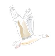 FG-Logo-v2_logo-4.png