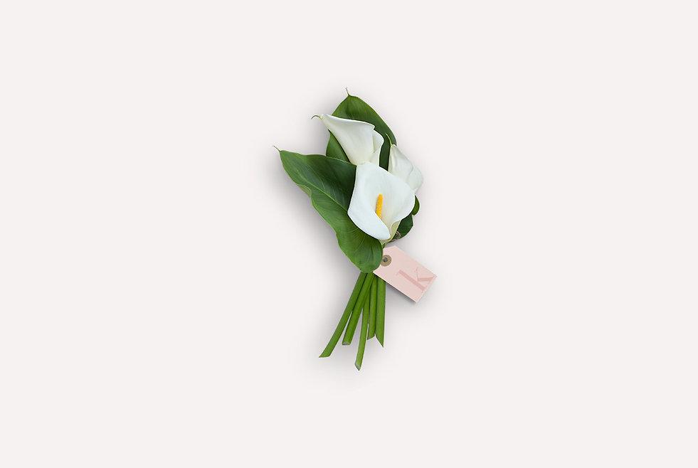 katydid-flowers-smaller.jpg
