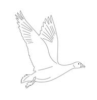 FG-Logo-v2_logo-5.png